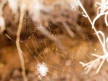 Une toile d'araignée claire et brillante avec un peu de la plume blanche dans lui Image stock