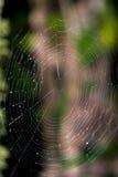 Une toile d'araignée d'araignées Photo stock