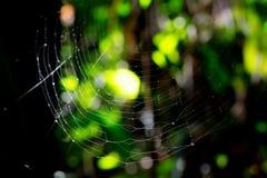 Une toile d'araignée d'araignées Photo libre de droits