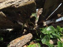 Une toile d'araignée sous les planches en bois Photos stock