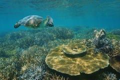 Une tortue de mer verte sous-marine au-dessus du récif coralien Photographie stock