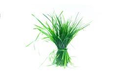 Une touffe d'herbe Photos stock