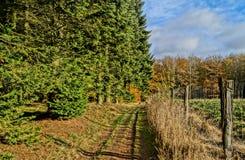 Une traînée de forêt Photographie stock