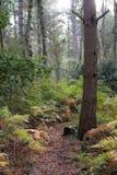 Une traînée de forêt bien usée par des cerfs communs et d'autres animaux sauvages photos stock