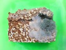 Une tranche de pain complet envahie avec des champignons de moule de nourriture d'un plat vert Photos stock