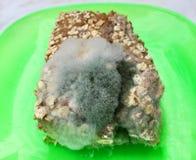 Une tranche de pain complet envahie avec des champignons de moule de nourriture d'un plat vert Image libre de droits