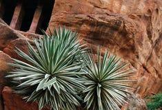 Une usine de cactus Images stock