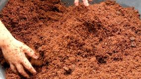 Une utilisation de garçon sa main pour préparer le sol sale sec pour planter des usines, jardinage organique banque de vidéos