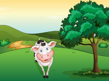 Une vache de sourire Photo stock