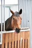 Une verticale de cheval brun dans la grange Photographie stock libre de droits