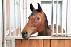 Une verticale de cheval brun dans la grange Photo libre de droits
