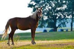 Une verticale de profil de tête de cheval sauvage photos libres de droits