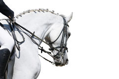 Une verticale du cheval gris de dressage d'isolement Photo stock