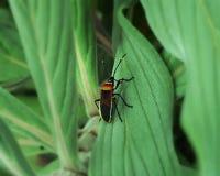 Une vie d'insectes Photo libre de droits