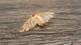 Une vie d'insectes Photographie stock libre de droits