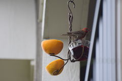 Une vie du ` s d'oiseau Photos stock