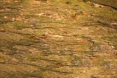 Une vieille écorce d'arbre verte jaune grise avec des fissures se ferment  texture extérieure naturelle photo libre de droits