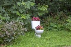 Une vieille cuvette des toilettes décorée comme un pot avec des fleurs parmi la végétation verte image stock