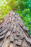 Une vieille fin d'arbre voient jusqu'à la texture d'arbre d'écorce Image libre de droits