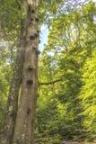 Une vieille forêt verte vibrante avec les arbres très grands photo stock