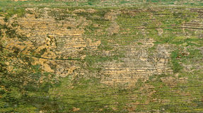 Une vieille surface verte en bois Images libres de droits