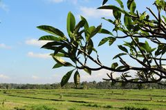 Une villa dans la campagne typique du village de Balinese images libres de droits