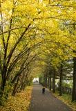 Une voûte des arbres d'automne avec les feuilles jaunes Photos libres de droits