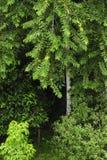 Une voie étroite mène par un couloir biologique tropical en Costa Rica photographie stock