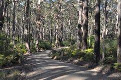Une voie d'accès d'incendie effectue sa voie par une forêt Images libres de droits