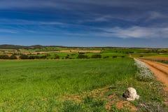 Une voie entre les gisements de céréale et les arbres photos stock
