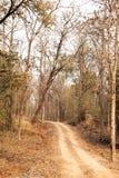 Une voie par la forêt de réservation de tigre de Pench Images stock