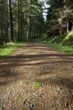 Une voie par une forêt de pin Photographie stock libre de droits