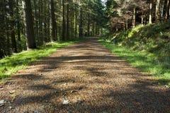 Une voie par une forêt de pin Photo libre de droits