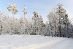 Une voie parmi des congères dans la forêt conifére Image stock