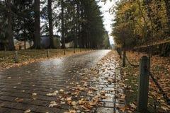 Une voie pendant l'automne Photo libre de droits
