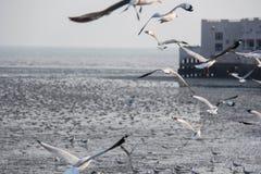 une volée d'oiseau image libre de droits