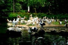Une volée des oiseaux blancs 2 photographie stock libre de droits