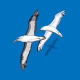 Une volée des oiseaux de vol Images stock