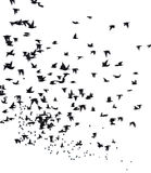 Une volée des oiseaux migrateurs Photos libres de droits
