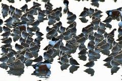 Une volée des oiseaux se reposant ensemble Photos libres de droits