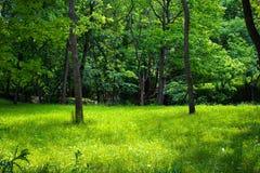 Une vue à l'intérieur des arbres Image stock