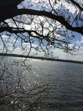 Une vue d'arbres Images libres de droits