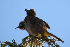 Une vue d'oeil d'oiseau Photo stock