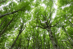 Une vue d'un bois avec le feuillage vert très intense et expressif images libres de droits