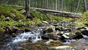 Une vue d'un courant de montagne qui coule en bas d'une pente des pierres avec les rondins en bois clips vidéos