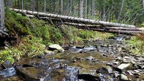 Une vue d'un courant de montagne qui coule en bas d'une pente des pierres avec les rondins en bois banque de vidéos