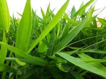 Une vue d'un ensemble de vert vif part longtemps photos libres de droits