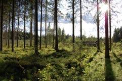 Une vue d'une forêt Images libres de droits