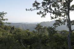 Une vue dans une forêt dans Sri Lanka image libre de droits