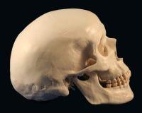 Une vue de côté de crâne Images stock